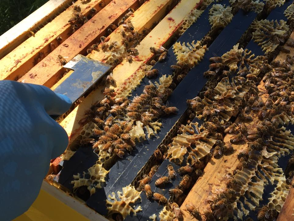 Bee Journal Update ~ Hive Check 6 July 2017